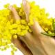 De beste op een rij: Mimosa parfums (2016)